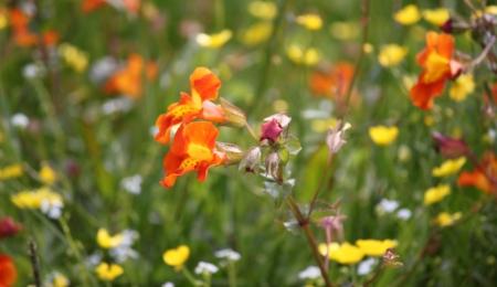 Flowers Muckle Roe